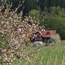 Weinbau Spari_16